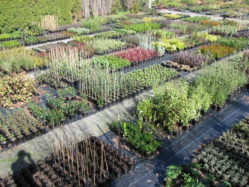 Retail & Shopping - Clareville Nursery & Garden Centre